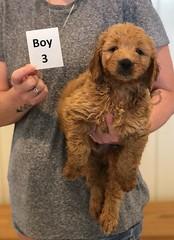 Bailey Boy 3 pic 2 7-30