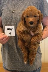 Bailey Boy 4 pic 3 7-30
