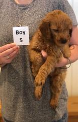 Bailey Boy 5 7-30