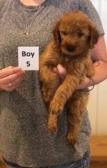 Bailey Boy 5 pic 2 7-30