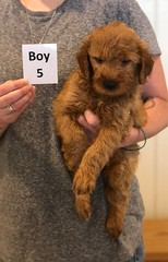 Bailey Boy 5 pic 4 7-30