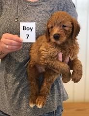 Bailey Boy 7 pic 3 7-30