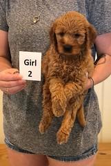Bailey Girl 2 pic 2 7-30