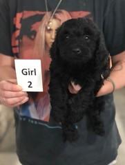 Ella Girl 2 7-30