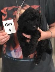 Ella Girl 4 pic 3 7-30