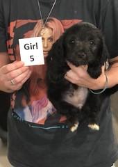 Ella Girl 5 pic 3 7-30