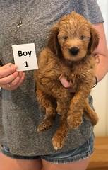 Bailey Boy 1 7-30