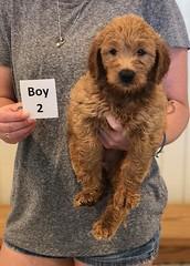 Bailey Boy 2 7-30