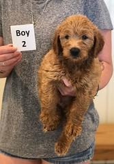Bailey Boy 2 pic 3 7-30