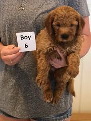 Bailey Boy 6 7-30