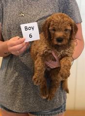 Bailey Boy 6 pic 2 7-30