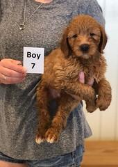 Bailey Boy 7 pic 2 7-30