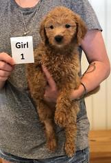 Bailey Girl 1 pic 3 7-30