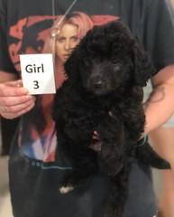Ella Girl 3 7-30