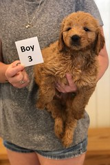 Bailey Boy 3 pic 4 7-30