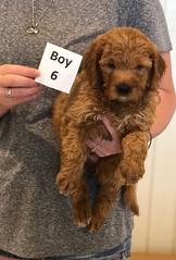Bailey Boy 6 pic 4 7-30