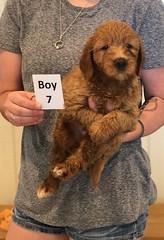 Bailey Boy 7 7-30