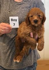 Bailey Boy 7 pic 4 7-30