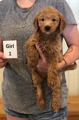 Bailey Girl 1 7-30