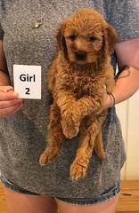 Bailey Girl 2 7-30