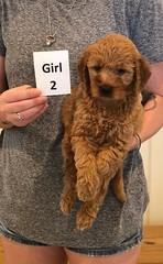 Bailey Girl 2 pic 3 7-30