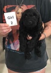 Ella Girl 2 pic 2 7-30