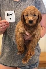 Bailey Boy 2 pic 2 7-30