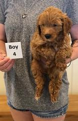 Bailey Boy 4 7-30