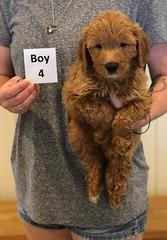 Bailey Boy 4 pic 2 7-30