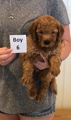 Bailey Boy 6 pic 3 7-30