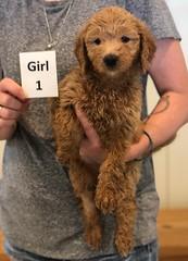 Bailey Girl 1 pic 4 7-30