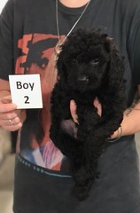 Ella Boy 2 7-30