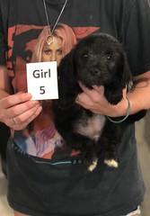 Ella Girl 5 pic 4 7-30
