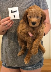 Bailey Boy 1 pic 2 7-30