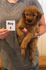Bailey Boy 5 pic 3 7-30