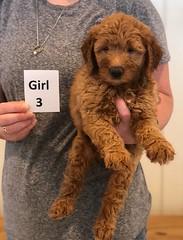 Bailey Girl 3 7-30
