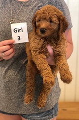 Bailey Girl 3 pic 4 7-30