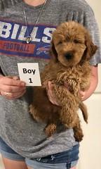 Carly Boy 1 pic 2 7-30