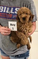 Carly Boy 1 pic 3 7-30