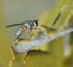Art of Fly