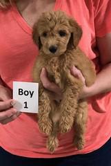 Gracie Boy 1 pic 4 8-1