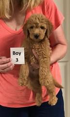 Gracie Boy 3 pic 4 8-1