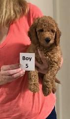 Gracie Boy 5 pic 4 8-1