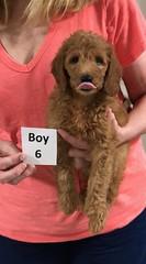 Gracie Boy 6 pic 3 8-1