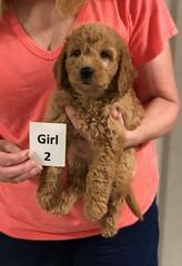 Gracie Girl 2 pic 3 8-1