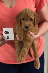 Gracie Girl 3 pic 3 8-1