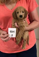 Ariel Girl 2 8-1