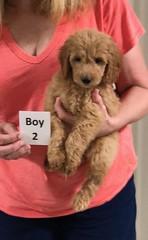 Gracie Boy 2 8-1