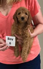 Gracie Boy 6 pic 4 8-1