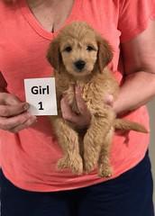 Gracie Girl 1 pic 4 8-1